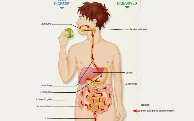 Sémiologie de l'appareil digestif