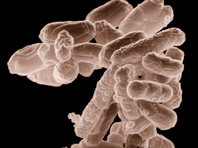Interactions Hôte-microorganisme