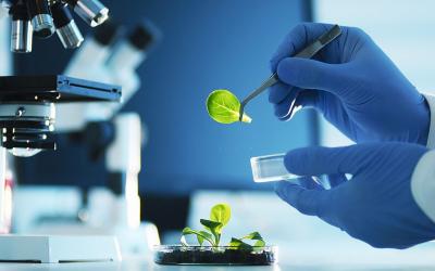 Introduction à la biologie végétale