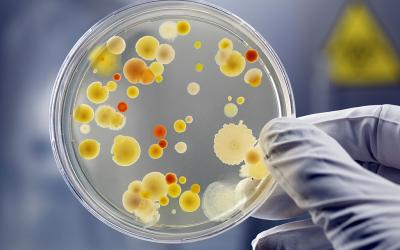 Introduction a la Bactériologie