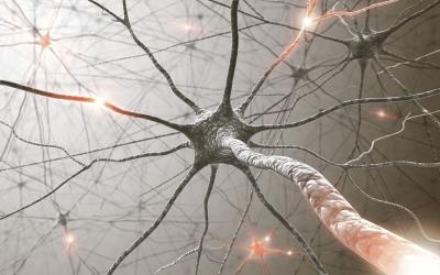 Organisation générale du système nerveux 1 : Le tissu Nerveux