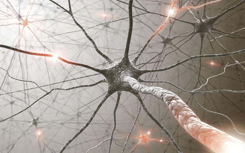 Organisation générale du système nerveux 1 Le tissu Nerveux