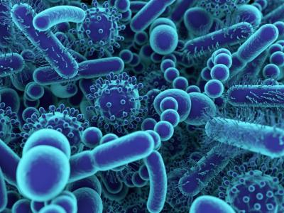 Structure et classification des virus